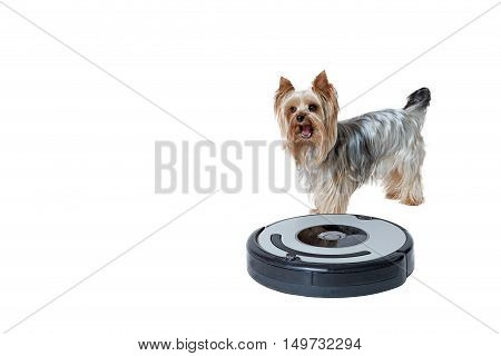 Cute Yorkshire Terrier is standing behind the robotic vacuum cleaner. All is isolated on the white background. All potential trademarks are removed.