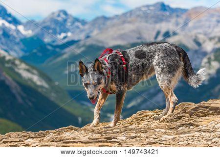Nihahi Ridge