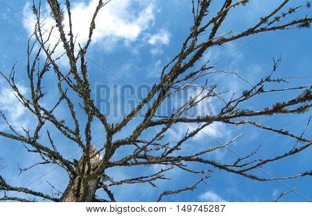 Tree branch and sky, Blue background. Enviroment background