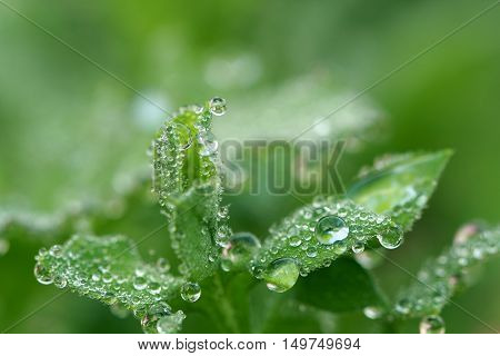 Close up drop of water on green gass