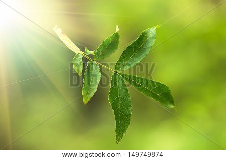 Green leaf hangs on a spider web in the forest on a green background