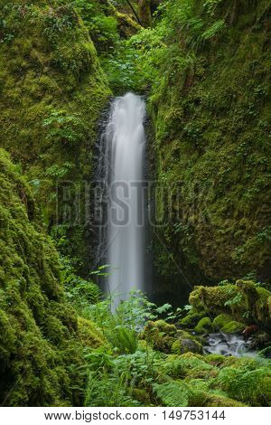 A stream wonders through a lush temperate rain forest