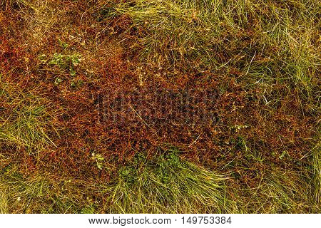 Grass, colors of fall, dry grass, dried grass, autumn, green and yellow grass, nature background