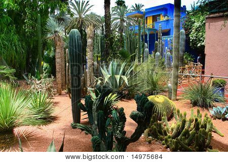 Jardine Majorelle In Marrakesh, Morocco