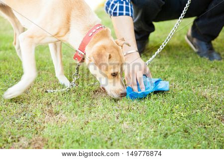Man Picking Up Some Dog Poop