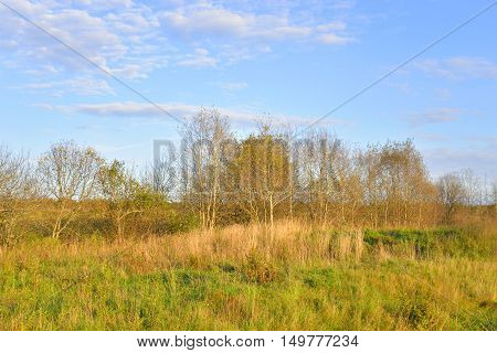 The photo of early autumn landscape at sunny evening.