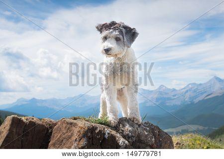 Hiking Sheepdog