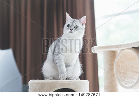 Cute cat playing on cat tower in room