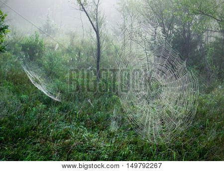 Cobwebs strewn across a meadow on a foggy morning. Multiple spiderwebs.