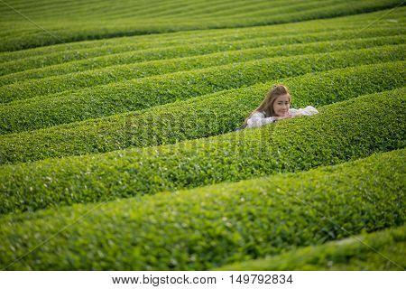 Woman in Green tea plant or Camellia sinensis field. Japan