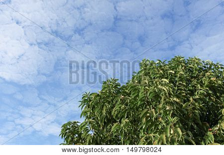 Green leaves of the tree and sky background