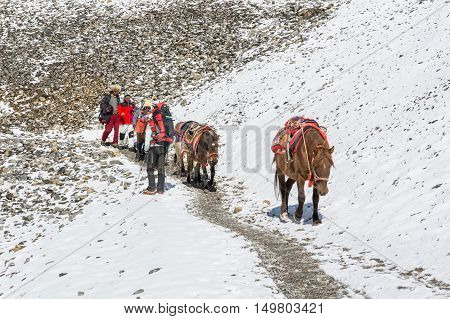 Thorong La, Nepal - October 16: Sherpas herding horses down a mountain pass at 5416 m, on October 2016 at Annapurna circuit trek in Nepal.