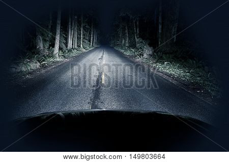 Halloween Night Driving Thru Forest - Straight Road and Creepy Dark Forest. Transportation Photo Collection.