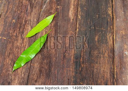 Mango leaf two on the wooden background.