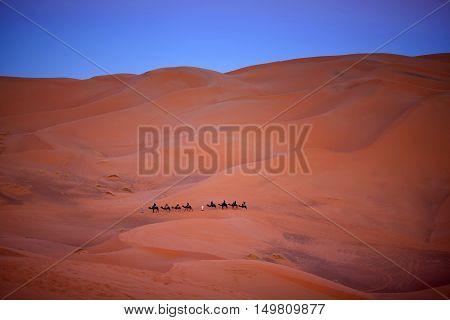 Camel trekking in Erg Chebbi, Western Sahara, Morocco