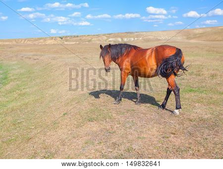 rural landscape with brown horse on the meadow