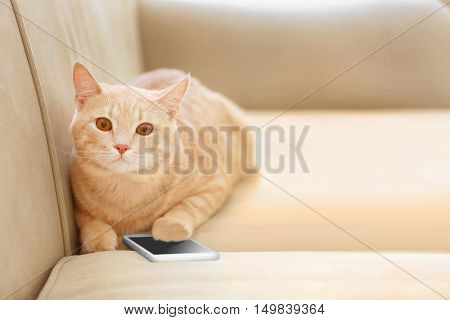 Funny cat with phone on coach