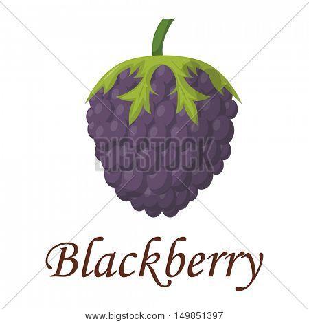 Blackberry vector illustration.