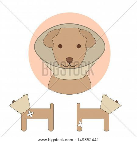 E-collar on a dog isolated on white background. Pet cone. Vector illustration of elizabethan collar for animal protection in veterinary