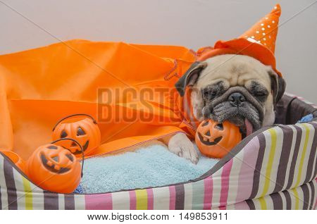 Cute pug dog with costume of happy halloween day sleep rest lay down on bed with plastic pumpkin Jack O'Lantern