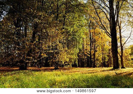 Autumn landscape- sunny autumn forest. Early autumn forest landscape lit by soft sunset light. Forest autumn landscape with yellowed autumn trees. Autumn nature view of autumn forest