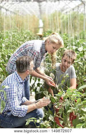 Young people attending apprenticeship in greenhouse