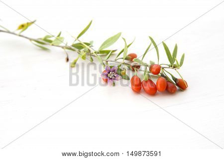 Branch with red ripe fresh goji berries