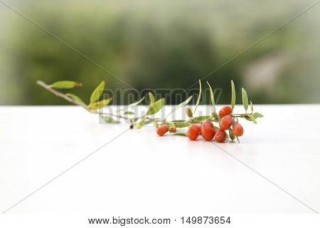 Detail of branch with goji berries, detox diet