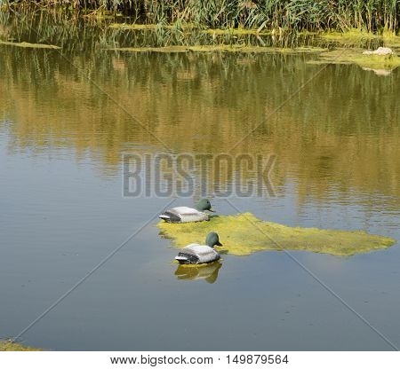 Artificial Duck On A Pond