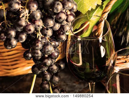 Glass of red wine wine grapes with leaves. Wine concept