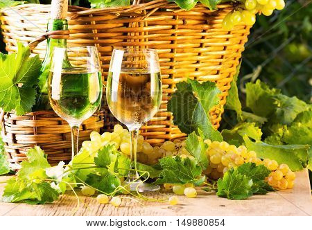 Two glasses of white wine bottle of wite wine white grapes with leaves in basket. Wine concept