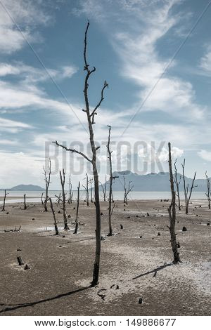 Dead trees on the empty coast during low tide.