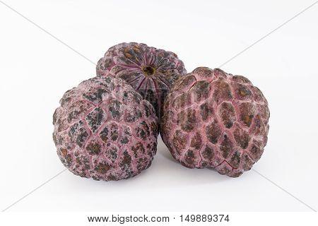 Red sugar apple 'Kampong mauve' (Annona squamosa)