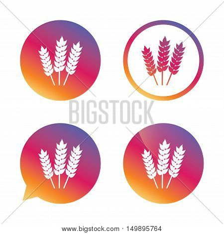 Agricultural sign icon. Gluten free or No gluten symbol. Gradient buttons with flat icon. Speech bubble sign. Vector