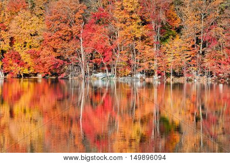 Spectacular autumn colors reflected in a lake in the Hudson Valley New York.