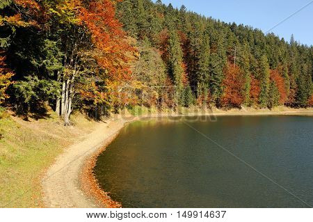 Forest Lake In Fall