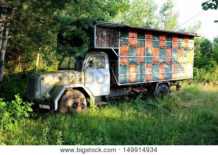 Front view of colorful beehive on old vintage truck in local forest in need of restoration, but it is still home for multiple bees