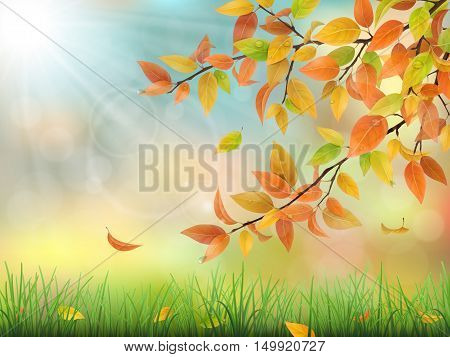 Realistic vector nature background. Autumn branch of a tree with colored leaves grass and drops of dew.