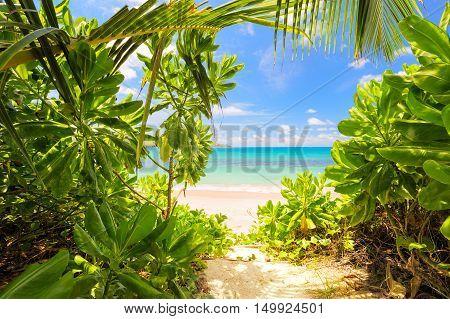 Look at stunning beach in Seychelles through wild green leafs