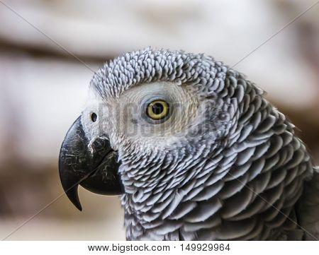 A Parrot Macaw Colorful ,beautiful,parrots looking,big parrots