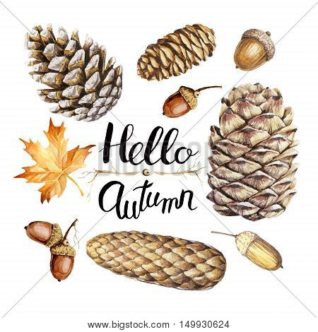 Hand drawn watercolor illustrations. Collection of fir cones pine cones acorns and leaves on white.