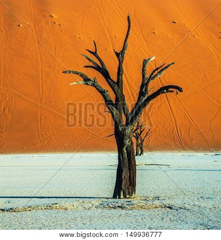 Orange dune and dried trees. Evening. The bottom of dried lake Deadvlei. Ecotourism in Namib-Naukluft National Park, Namibia