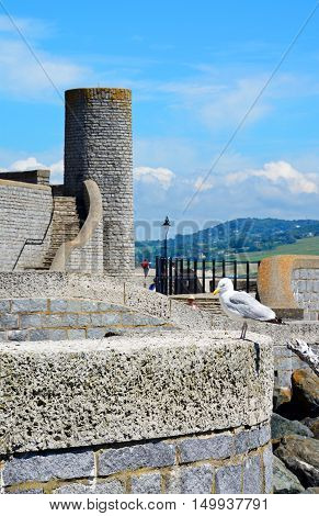 LYME REGIS, UNITED KINGDOM - JULY 18, 2016 - Round tower at Gun Cliff Walk with a seagull in the foreground Lyme Regis Dorset England UK Western Europe, July 18, 2016.