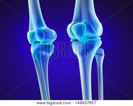 Knee anatomy. Xray view. Medically accurate 3D illustration
