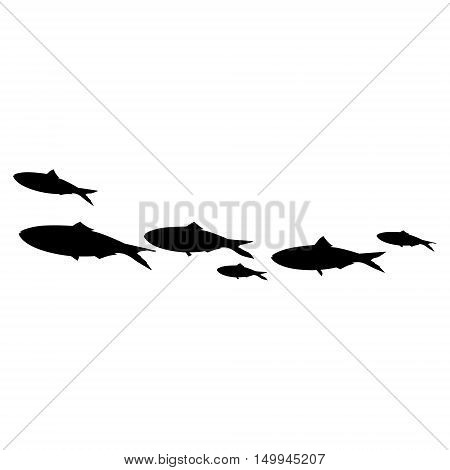 Vector illustration school of fish swimming in group. Sardines black silhouette