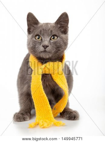 gray kitten in a yellow scarf on a white background, smoky cat in knitted scarf, isolated on white