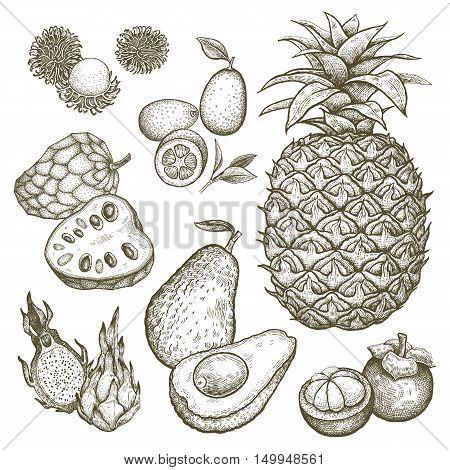 Kumquat pineapple dragonfruit rambutan mangosteen cherimoya avocado. Black and white exotic fruit illustration. Vector hand drawing isolated on white background. Style vintage engraving.