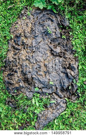Fresh Buffalo Or Cow Dung For Fertilizer In Nature.