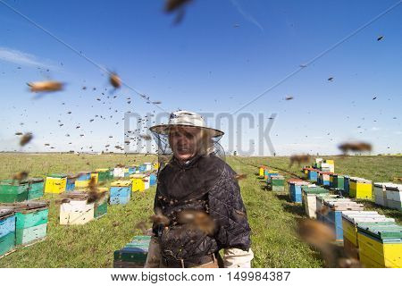 Horizontal portrait of an apiarist watching over his bee hives on a green field