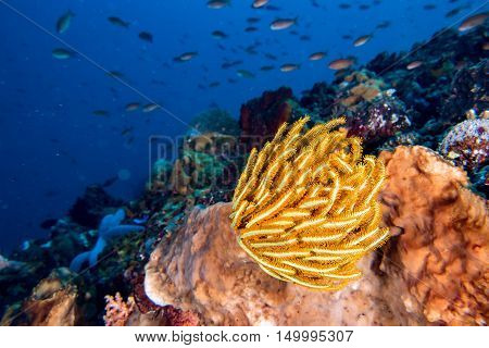 Colorful Underwater Realms Of Raja Ampat, Papua Indonesia